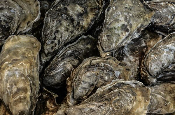 oyster-in-group