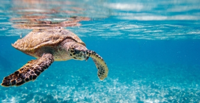 Under Water Turtle in Seychelles