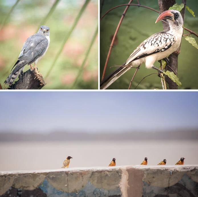 Gambian Birds